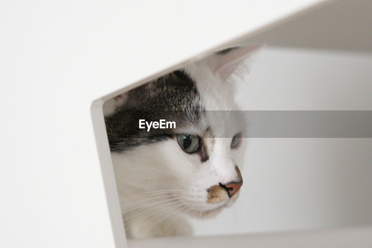domestic, one animal, animal themes, animal, mammal, domestic animals, cat, pets, domestic cat, feline, vertebrate, indoors, looking, close-up, animal body part, no people, white color, looking away, whisker, animal head, animal eye