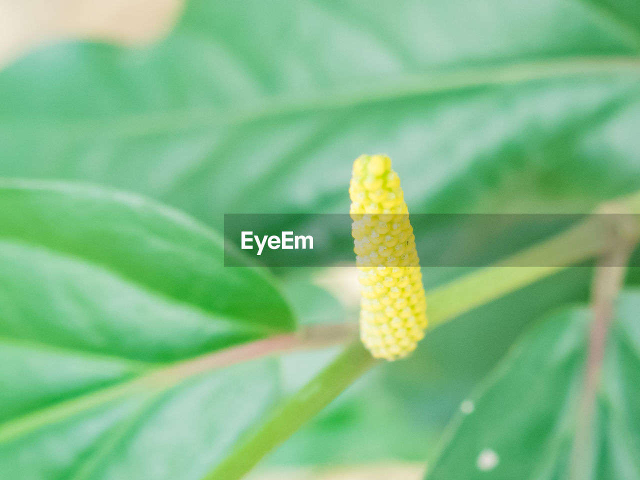 growth, nature, plant, green color, beauty in nature, no people, leaf, yellow, close-up, fragility, flower, freshness, day, outdoors, flower head