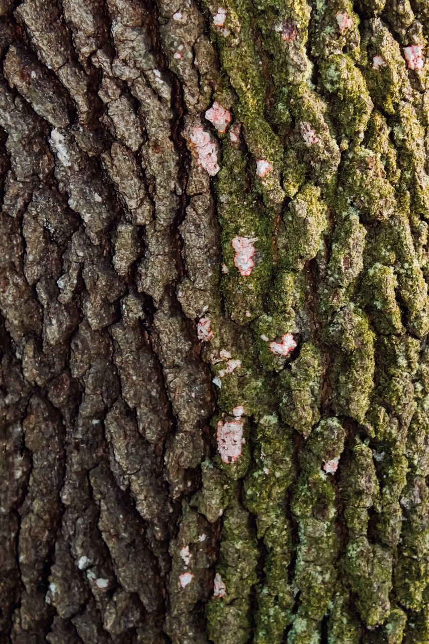 full frame, tree trunk, backgrounds, trunk, plant, tree, close-up, textured, no people, nature, pattern, growth, day, moss, rough, plant bark, brown, extreme close-up, outdoors, wood - material, bark