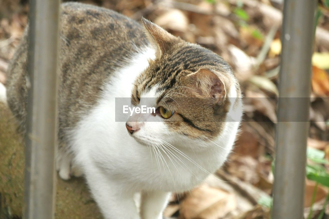 animal themes, mammal, animal, one animal, feline, cat, domestic animals, domestic, pets, domestic cat, vertebrate, no people, close-up, focus on foreground, looking, day, whisker, looking away, portrait, nature, animal head, animal eye, tabby