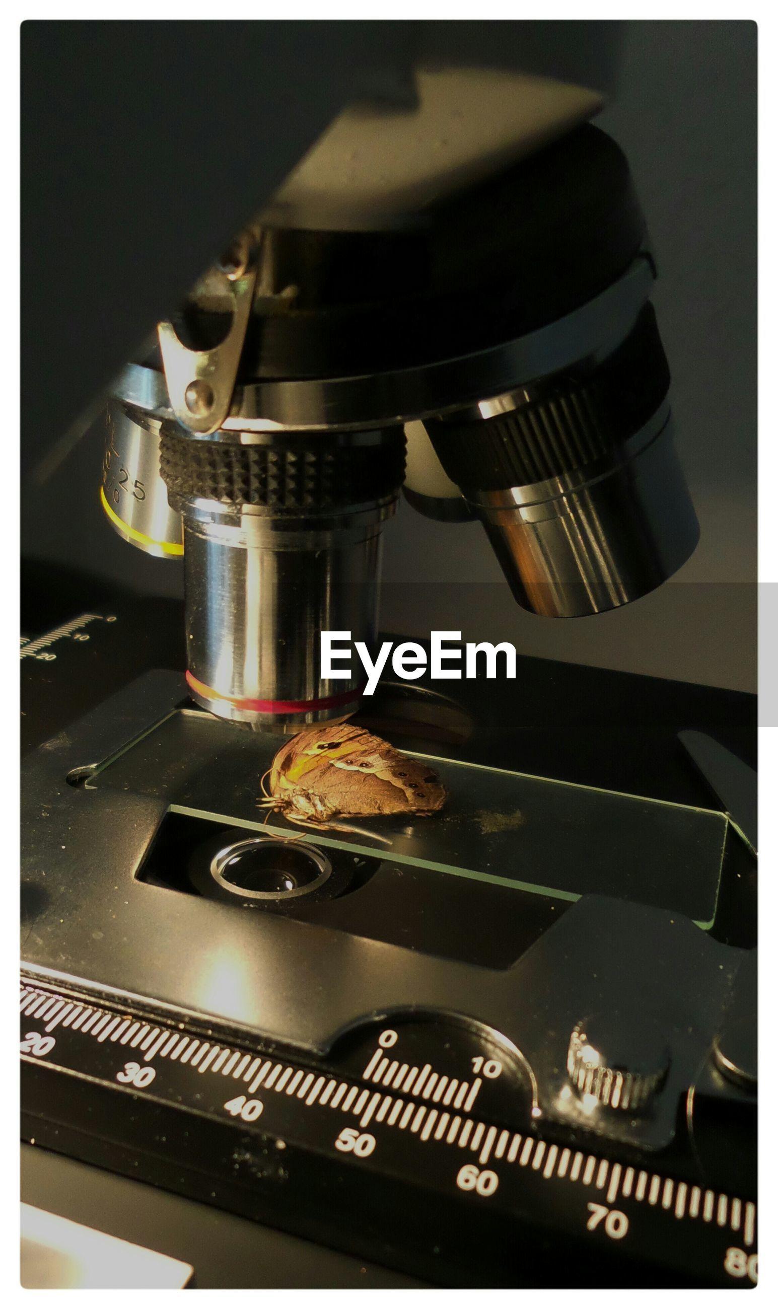 Butterfly kept on microscope