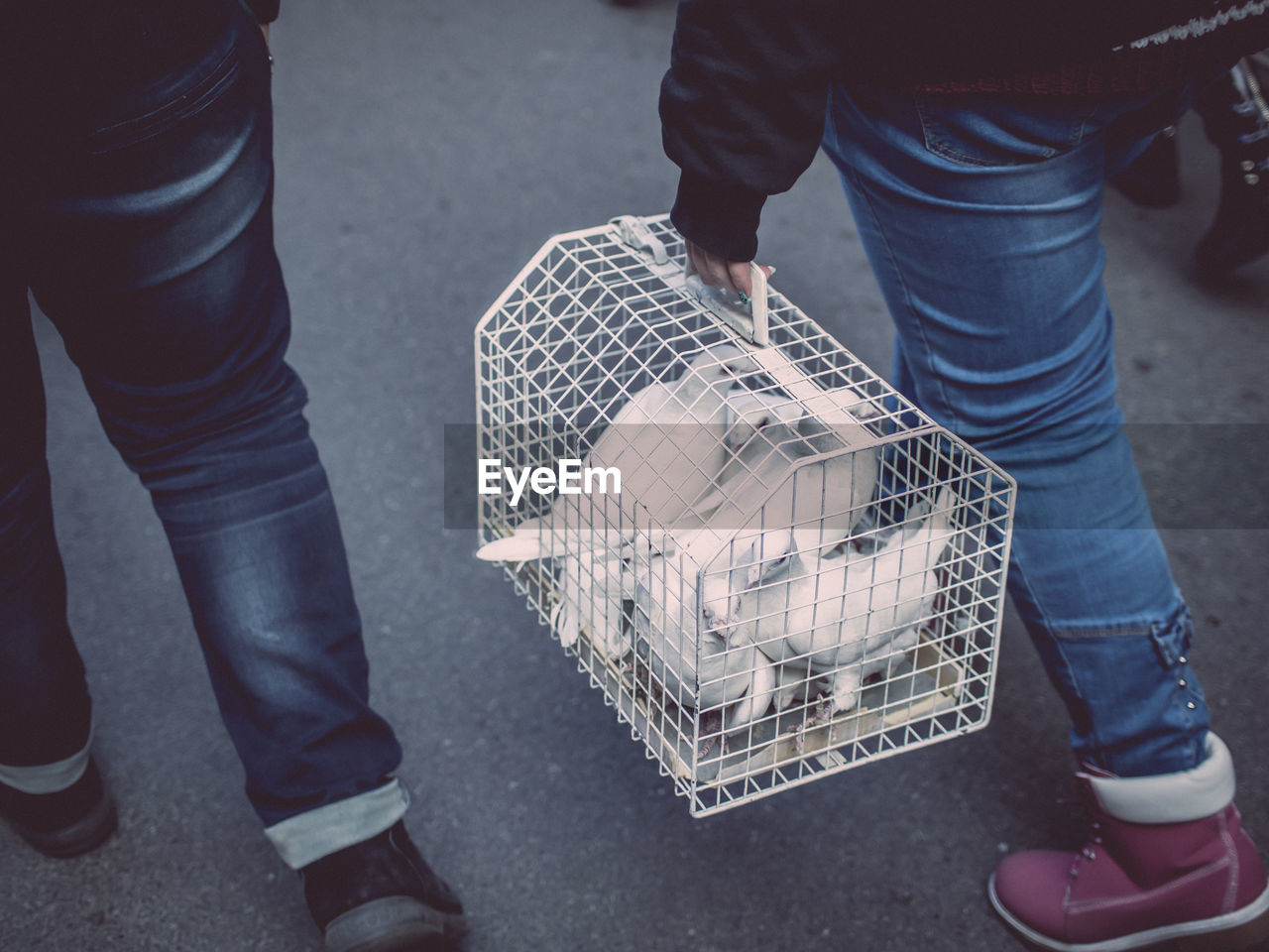 Low section of woman carrying doves in cage on street