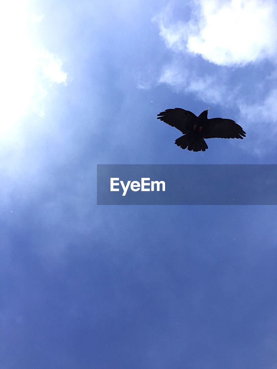 low angle view, flying, one animal, animal themes, bird, animals in the wild, mid-air, spread wings, nature, sky, day, animal wildlife, outdoors, no people, beauty in nature, bat - animal