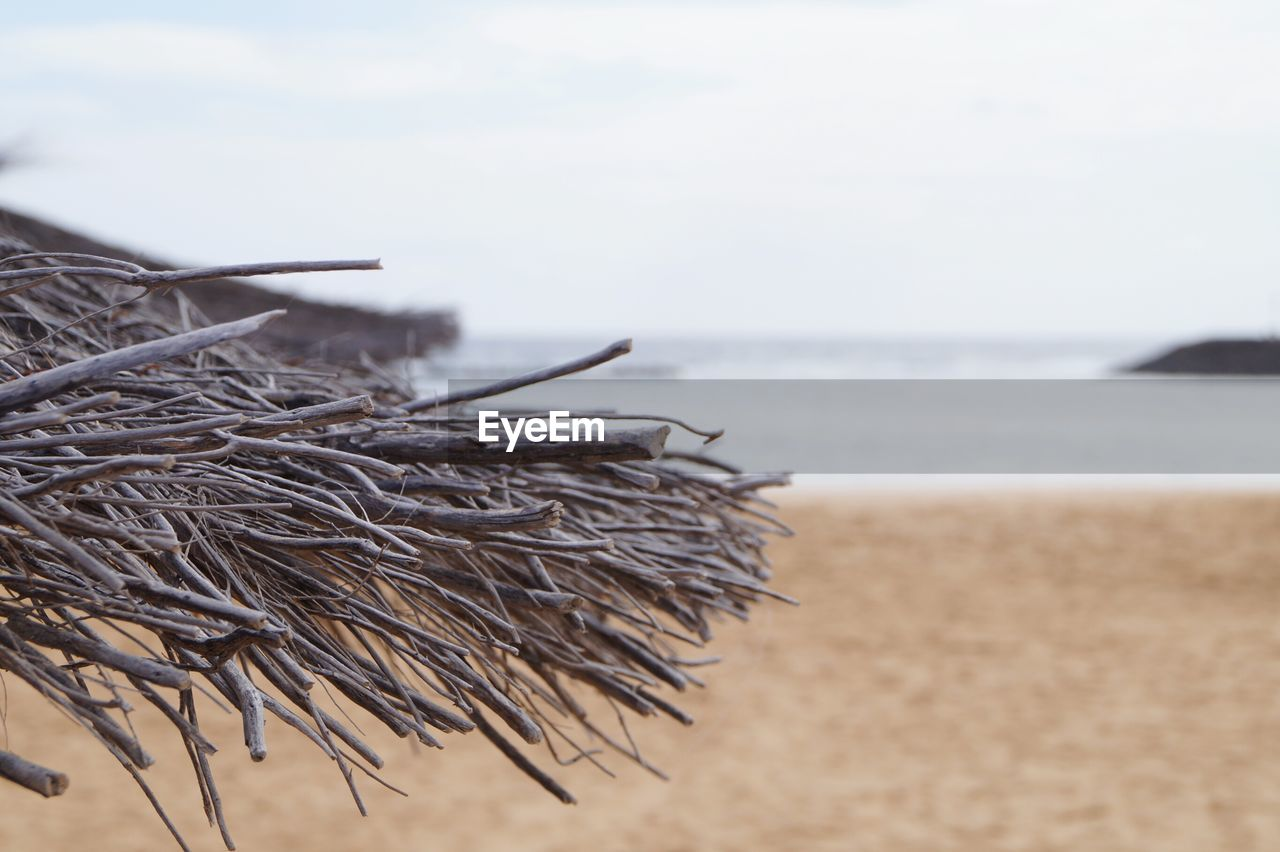 Close-Up Of Wood At Beach Against Sky