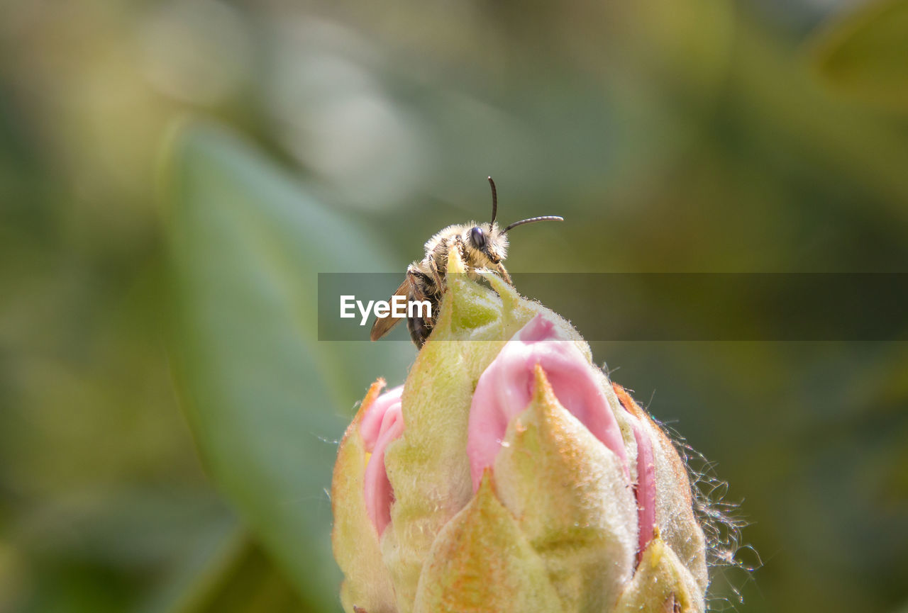 invertebrate, flower, flowering plant, insect, animals in the wild, animal, animal wildlife, one animal, close-up, beauty in nature, animal themes, plant, fragility, vulnerability, growth, petal, freshness, day, nature, flower head, no people, outdoors, pollination, sepal