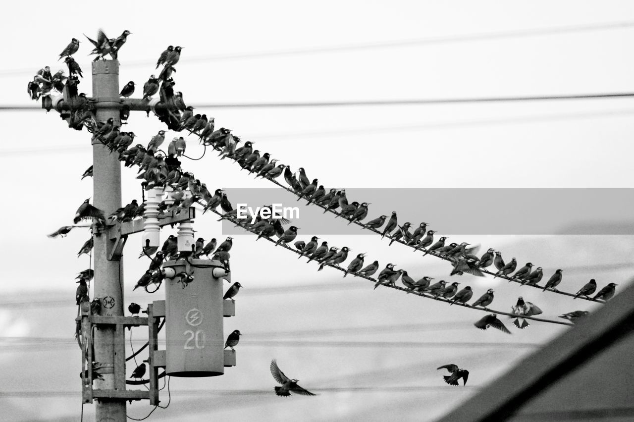 Close-Up Of Birds On Wire Against Sky