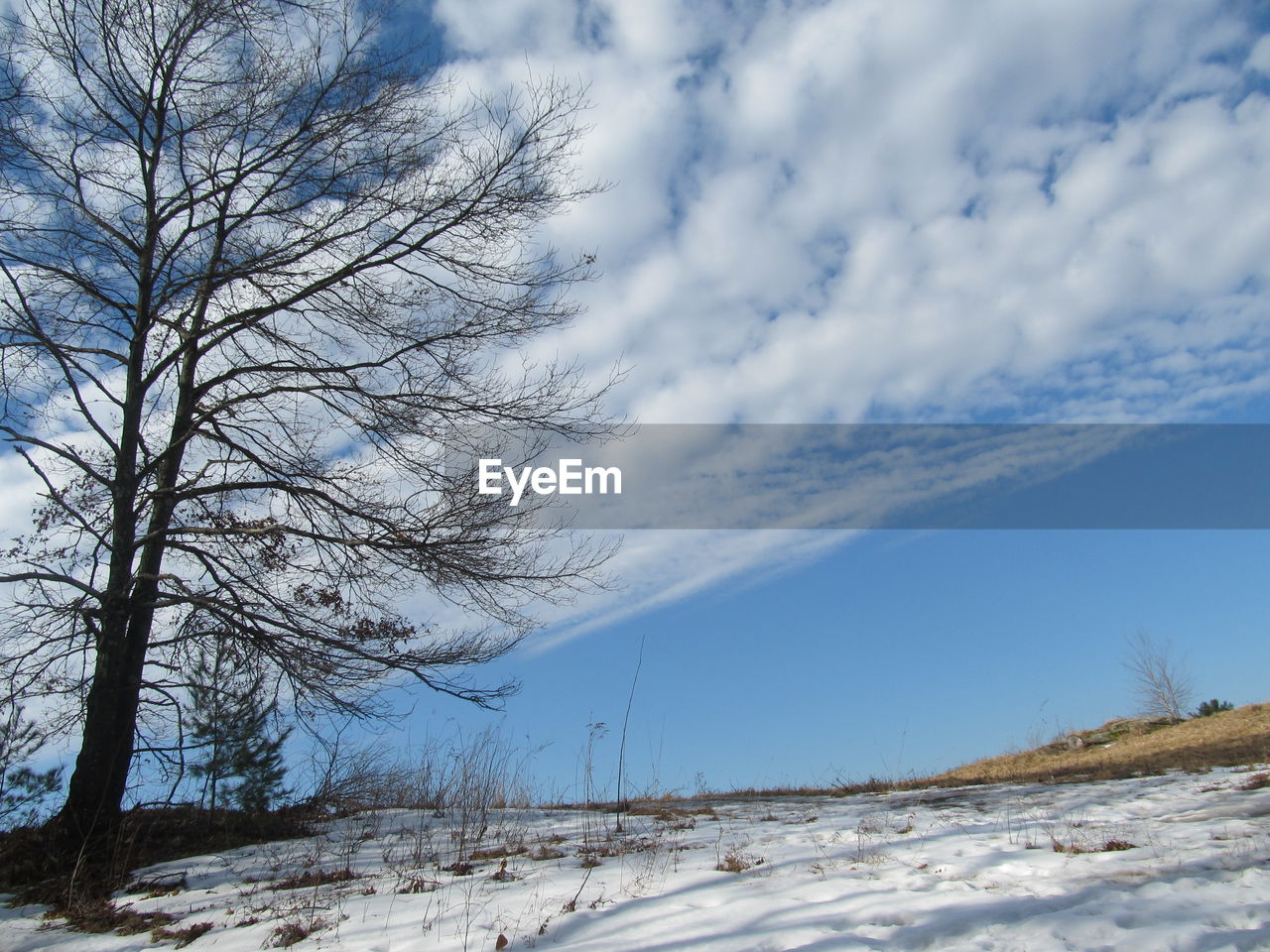 snow, cold temperature, winter, sky, bare tree, tree, cloud - sky, plant, tranquility, nature, scenics - nature, beauty in nature, no people, road, tranquil scene, transportation, day, non-urban scene, land, outdoors