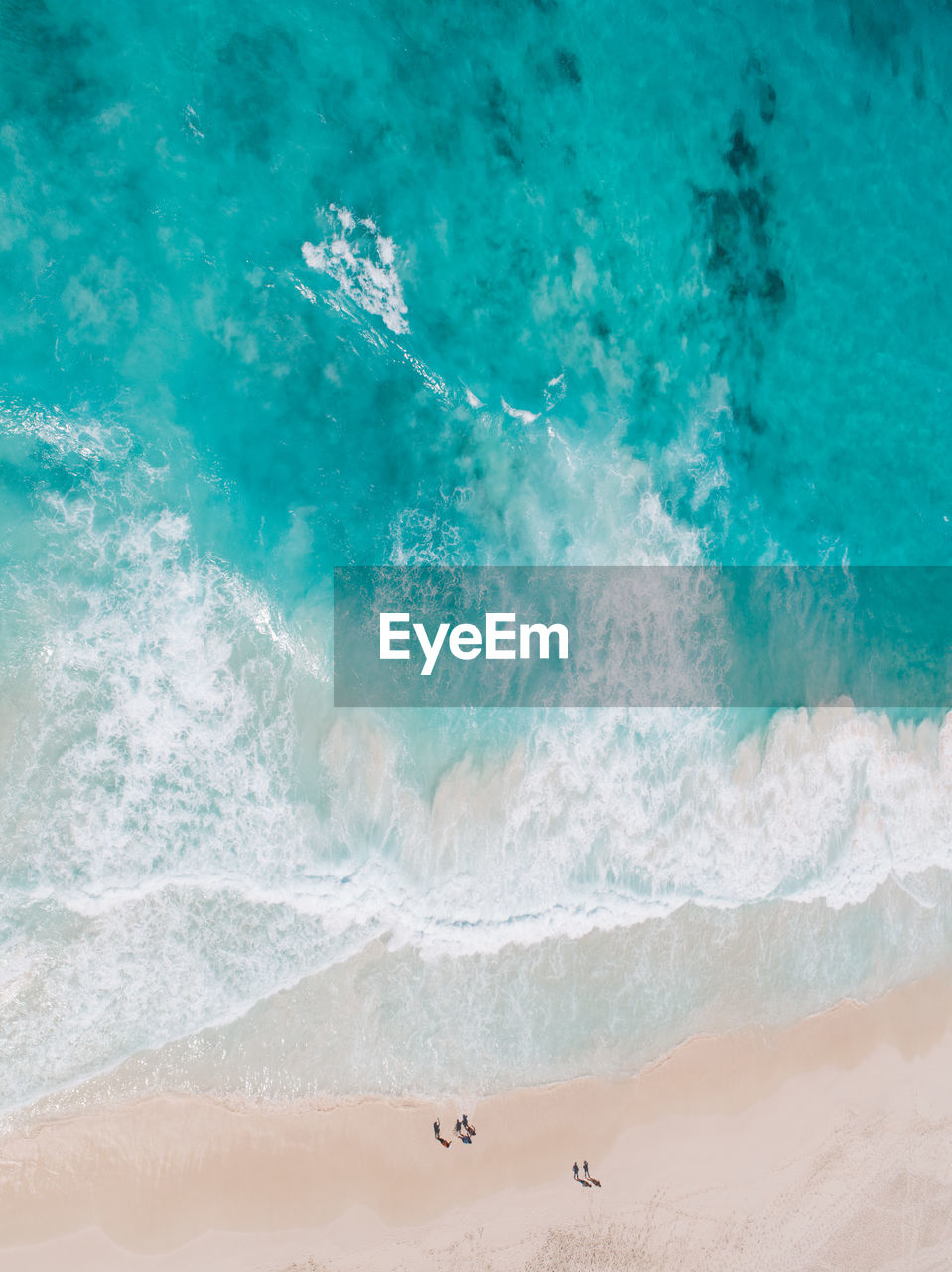 water, sea, land, motion, beauty in nature, nature, wave, sport, animal themes, beach, day, animal, aquatic sport, surfing, animals in the wild, sand, vertebrate, animal wildlife, high angle view, outdoors, turquoise colored