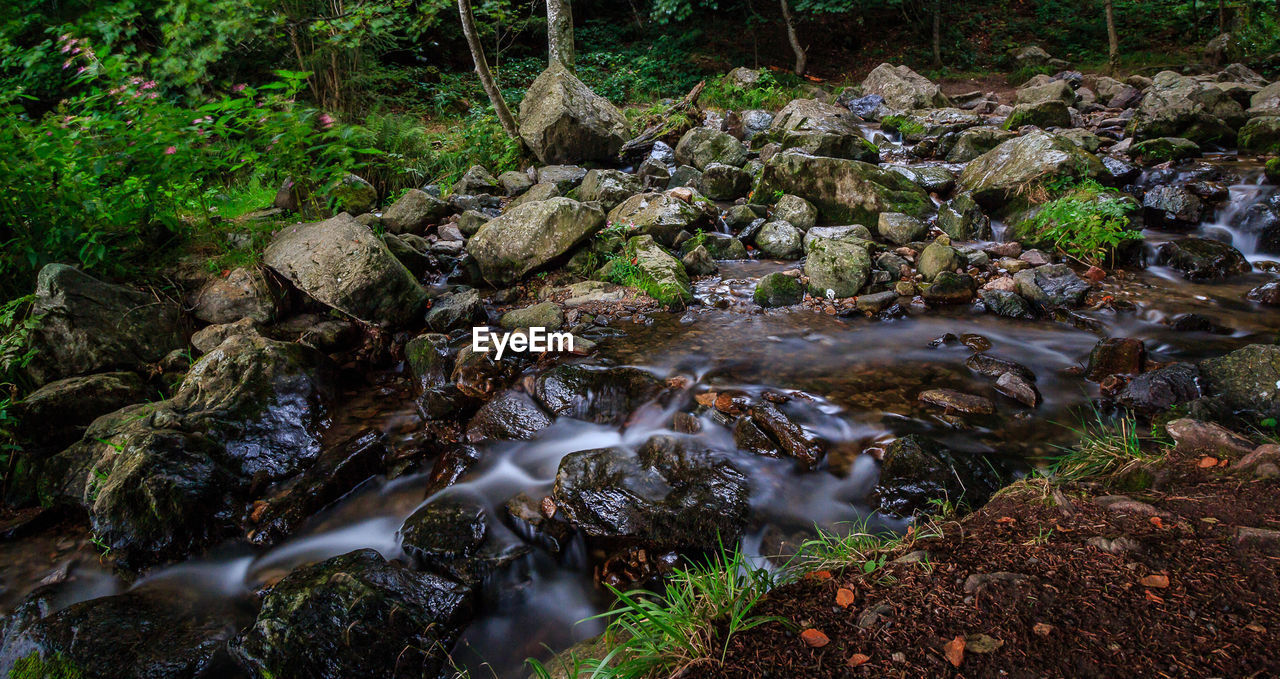 rock, water, solid, rock - object, nature, forest, motion, flowing water, tree, stream - flowing water, land, no people, long exposure, scenics - nature, day, moss, blurred motion, beauty in nature, downloading, flowing, outdoors, pollution, purity, rainforest