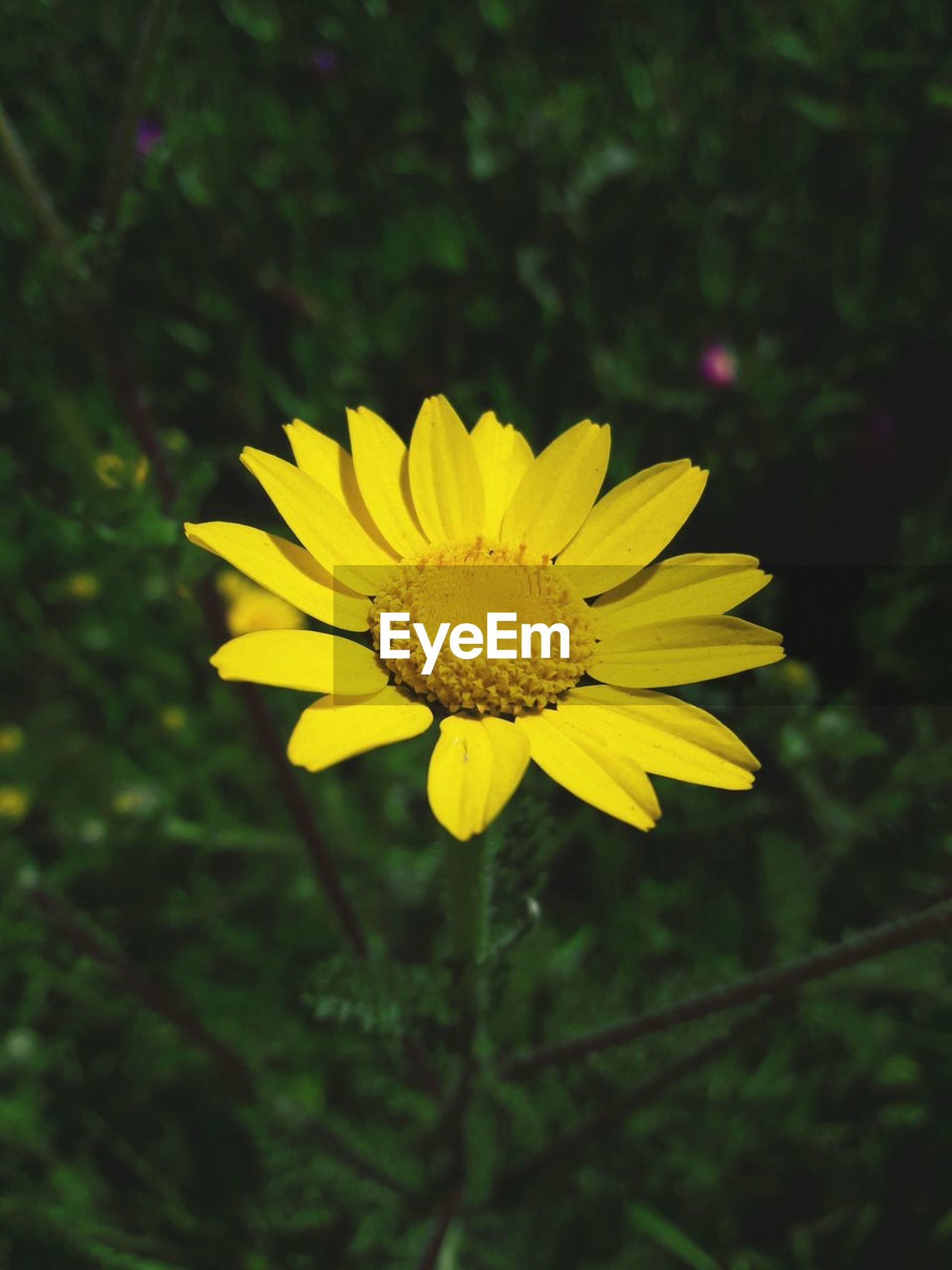 flower, flowering plant, yellow, fragility, plant, vulnerability, freshness, beauty in nature, petal, flower head, inflorescence, growth, close-up, focus on foreground, pollen, nature, no people, day, outdoors