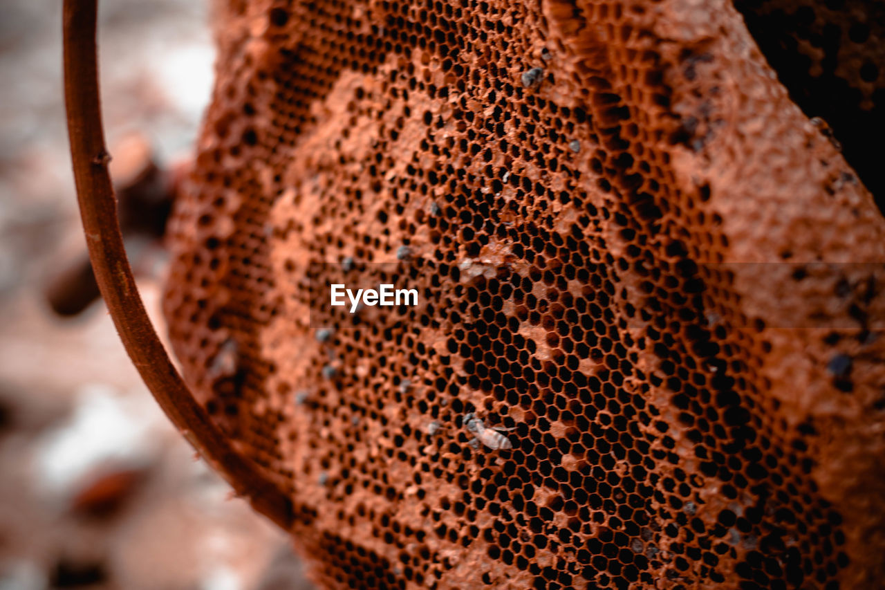 animal, animal themes, close-up, animals in the wild, animal wildlife, no people, focus on foreground, brown, mammal, one animal, day, natural pattern, pattern, beauty in nature, nature, rusty, outdoors, invertebrate, selective focus