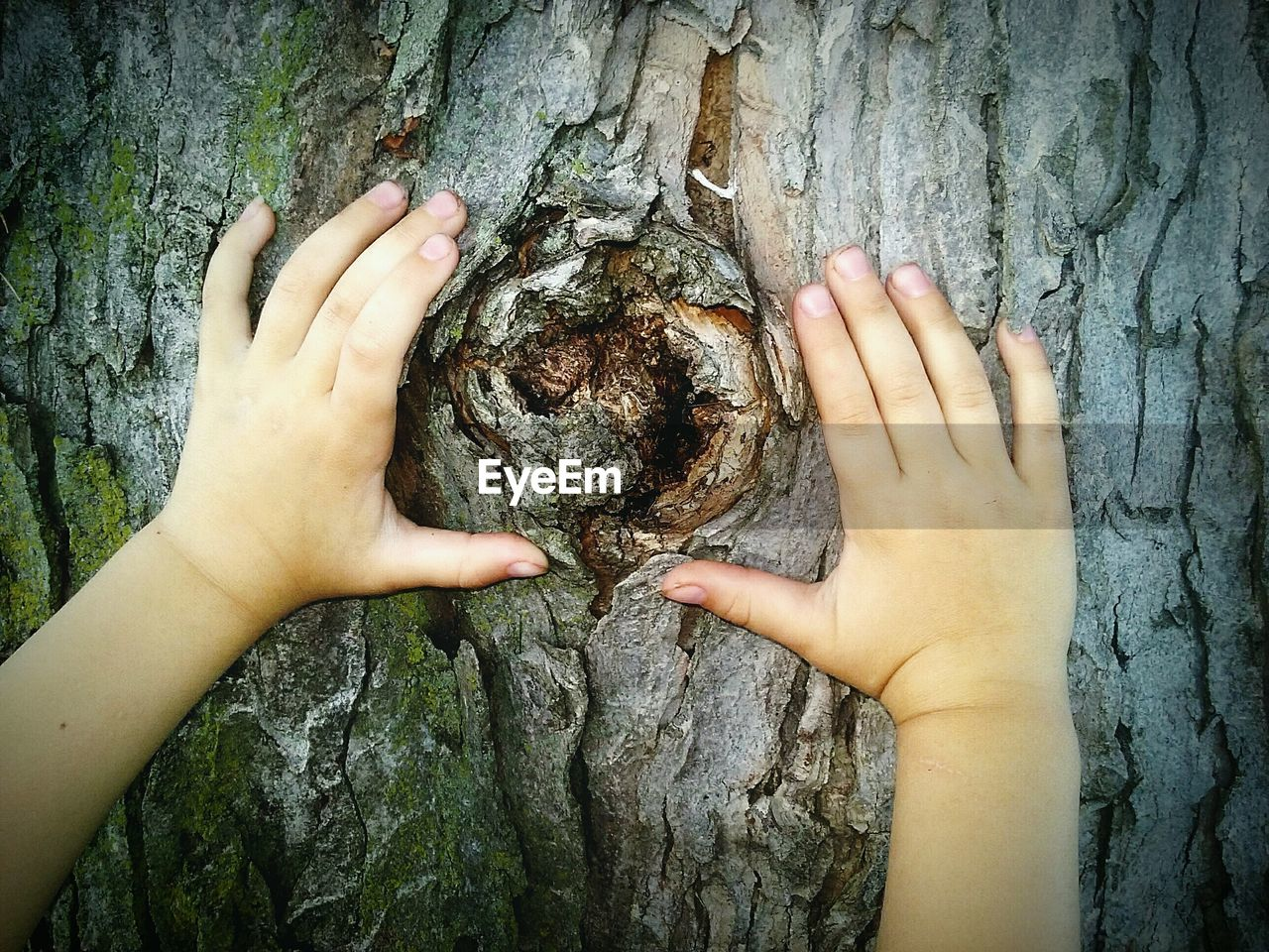 Cropped Image Of Child Hand On Tree Trunk