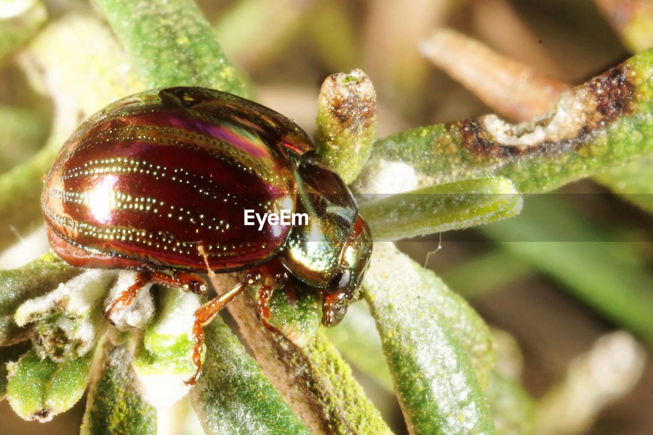 Detail shot of bug on plant