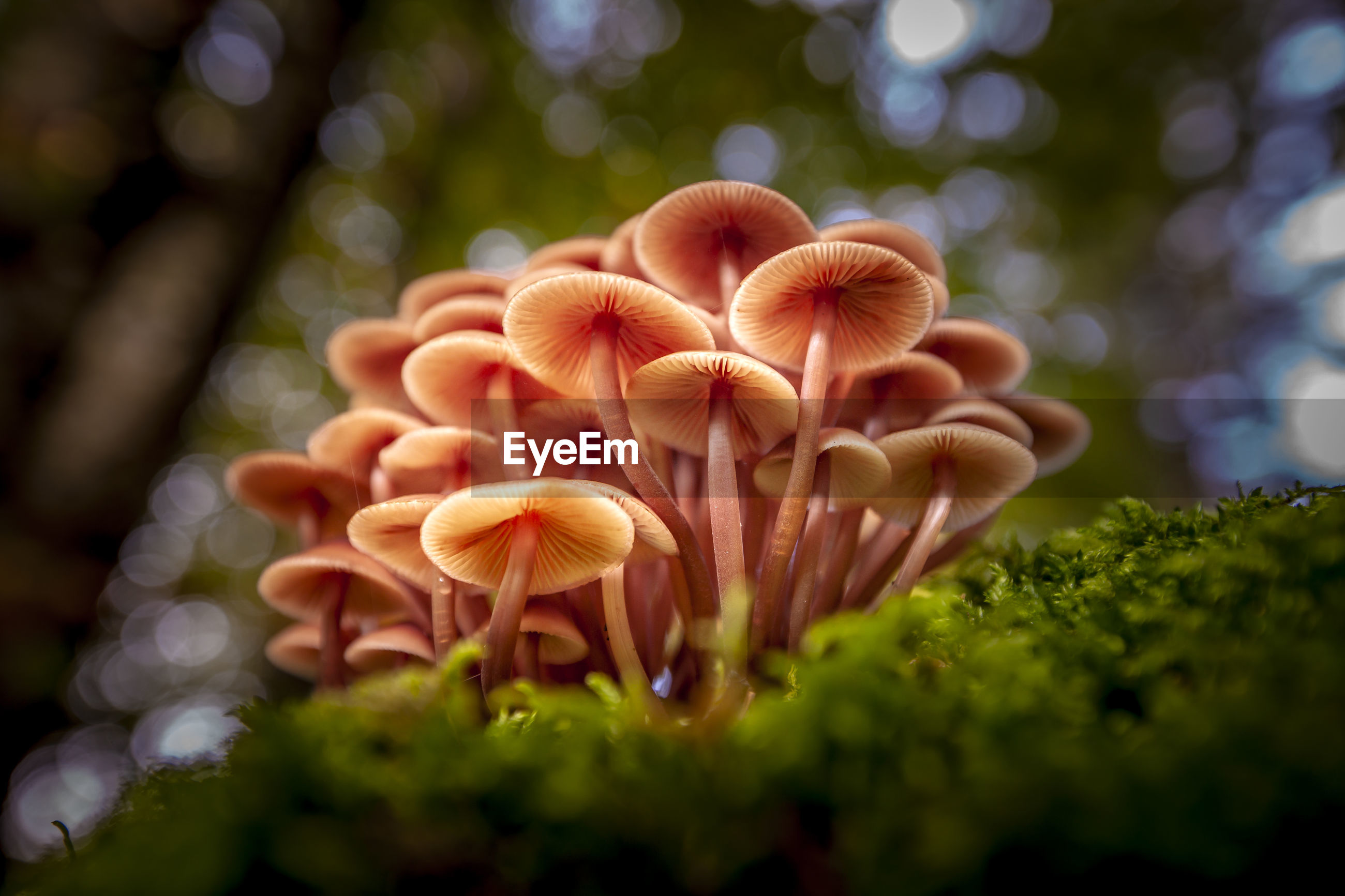 CLOSE-UP OF MUSHROOM GROWING IN GARDEN