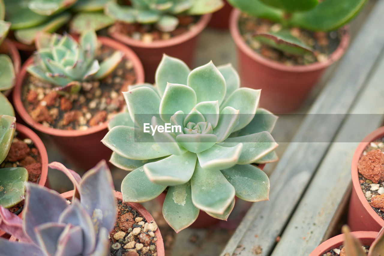 growth, succulent plant, plant, beauty in nature, potted plant, leaf, plant part, nature, day, high angle view, cactus, green color, close-up, no people, flower, freshness, botany, focus on foreground, vulnerability, flowering plant, outdoors, flower head, flower pot