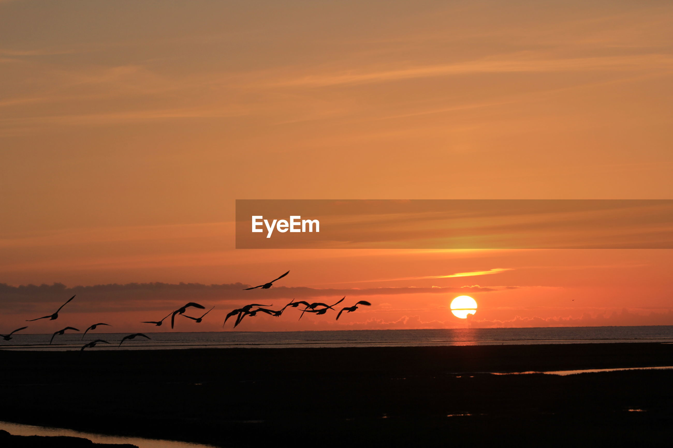 Flock of silhouette birds flying at beach against sky during sunset