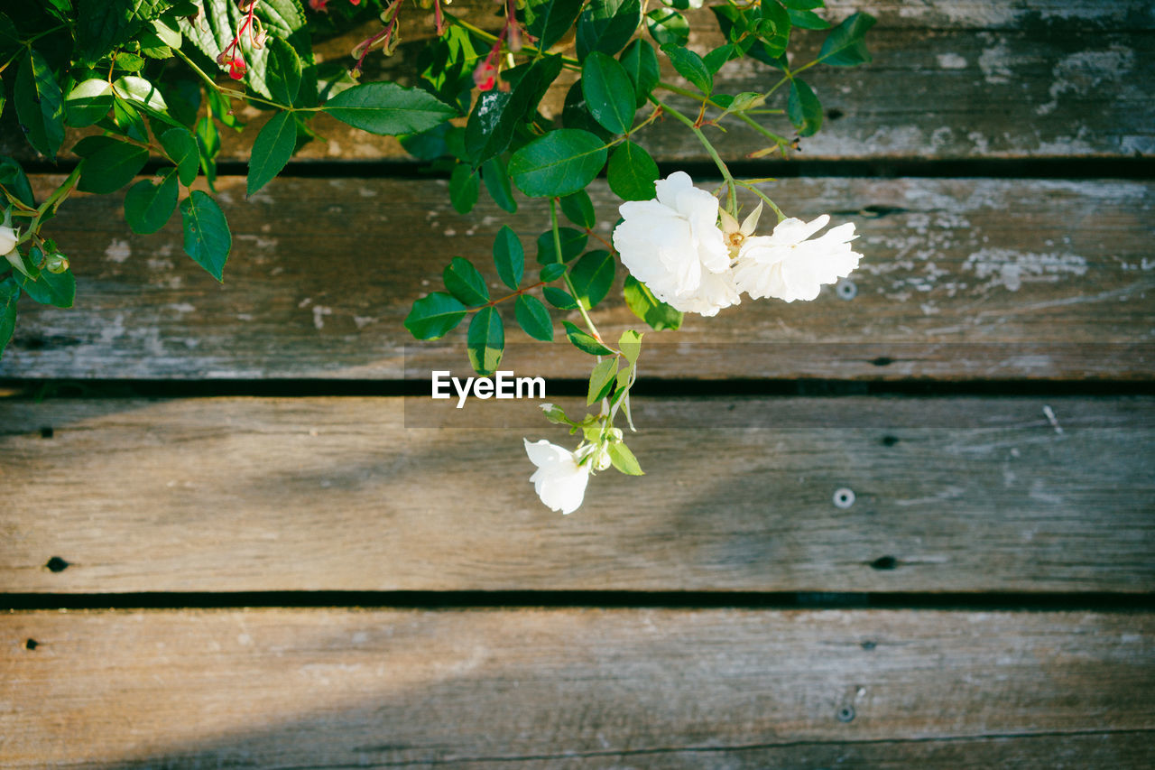 flower, growth, nature, plant, leaf, beauty in nature, fragility, petal, wood - material, no people, blooming, freshness, outdoors, close-up, day, flower head