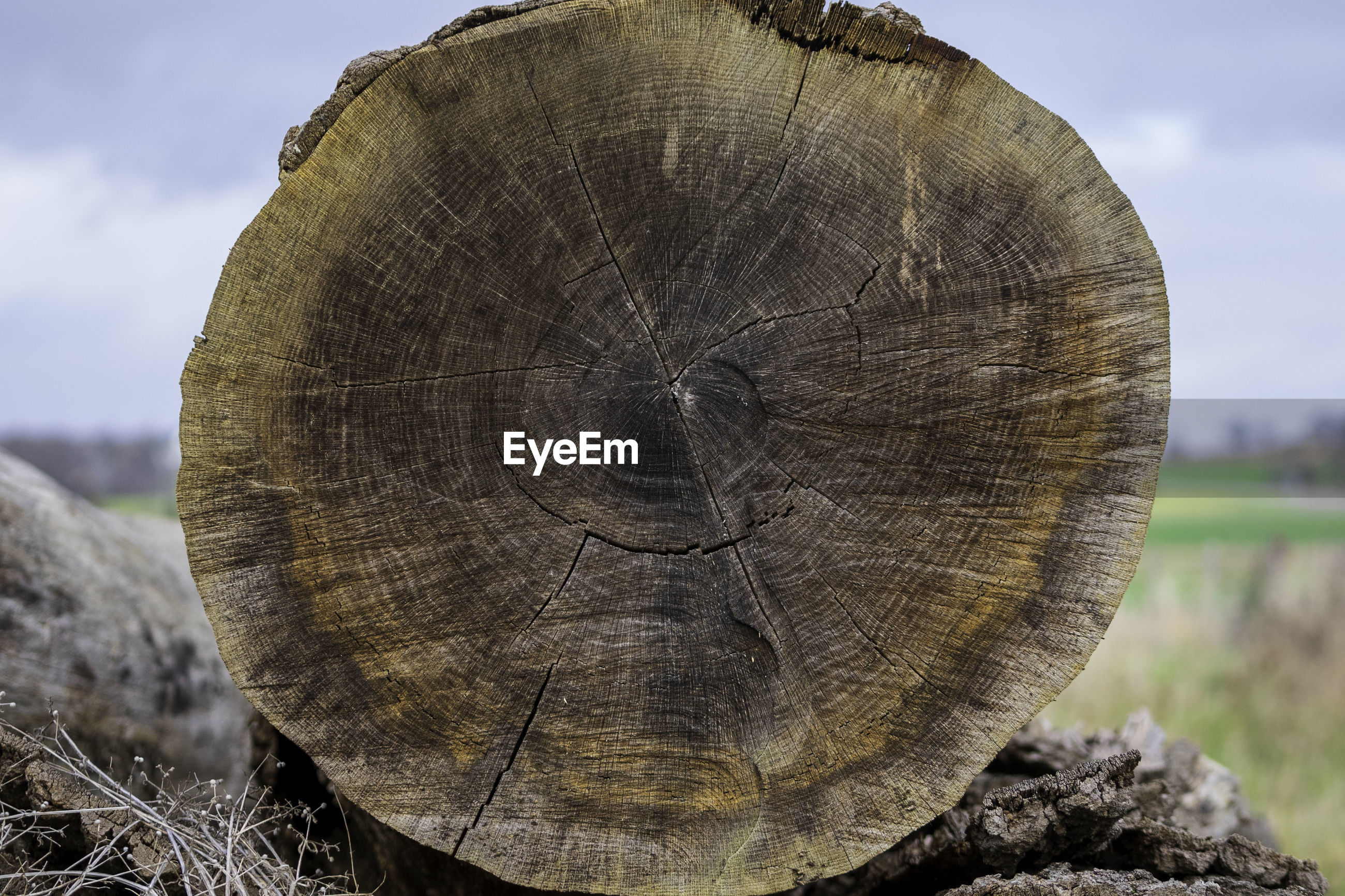 Close-up of tree stump in front of field