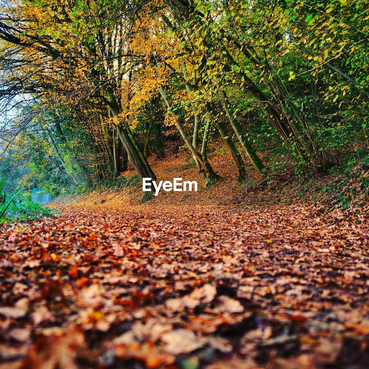 tree, autumn, plant, plant part, leaf, land, nature, day, change, forest, beauty in nature, falling, growth, tranquility, footpath, tranquil scene, selective focus, no people, non-urban scene, the way forward, outdoors, leaves, surface level, fall, autumn collection