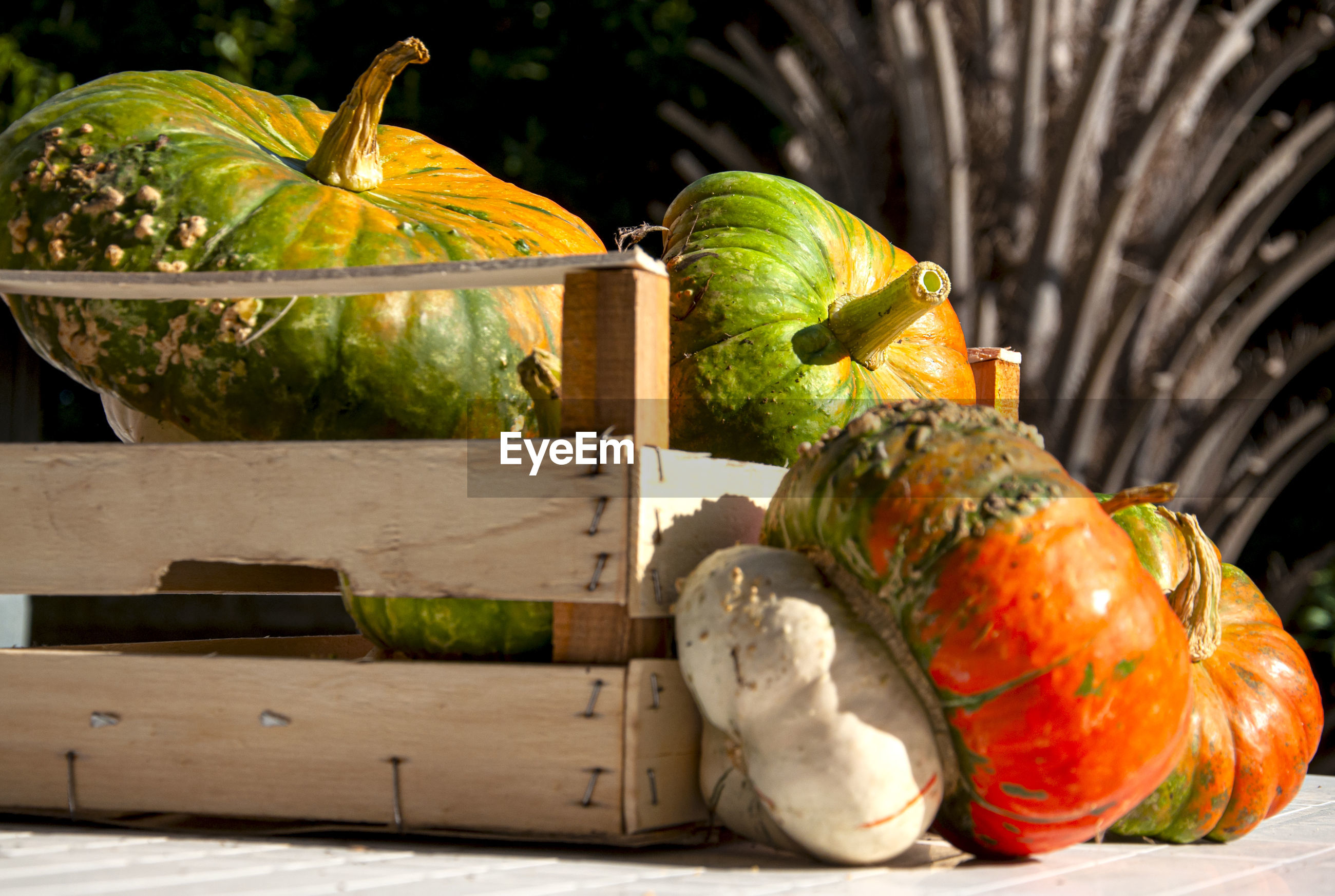 CLOSE-UP OF PUMPKIN ON WOODEN TABLE
