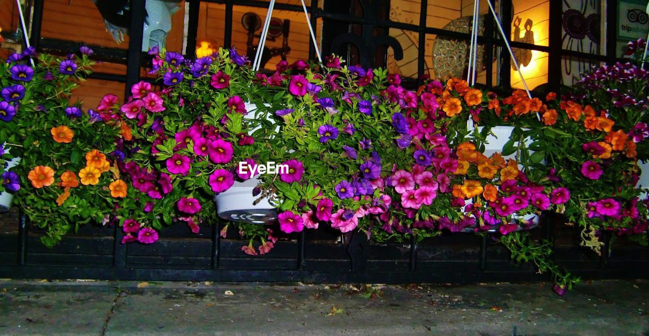 flower, growth, fragility, nature, freshness, plant, beauty in nature, outdoors, no people, pink color, day, multi colored, window box, blooming, flower head, architecture, petunia