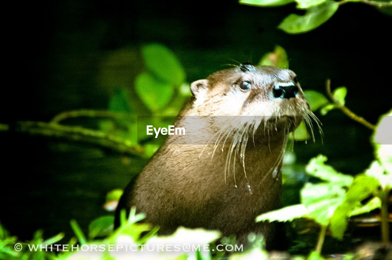 one animal, focus on foreground, animals in the wild, animal themes, animal wildlife, mammal, no people, day, outdoors, plant, nature, close-up