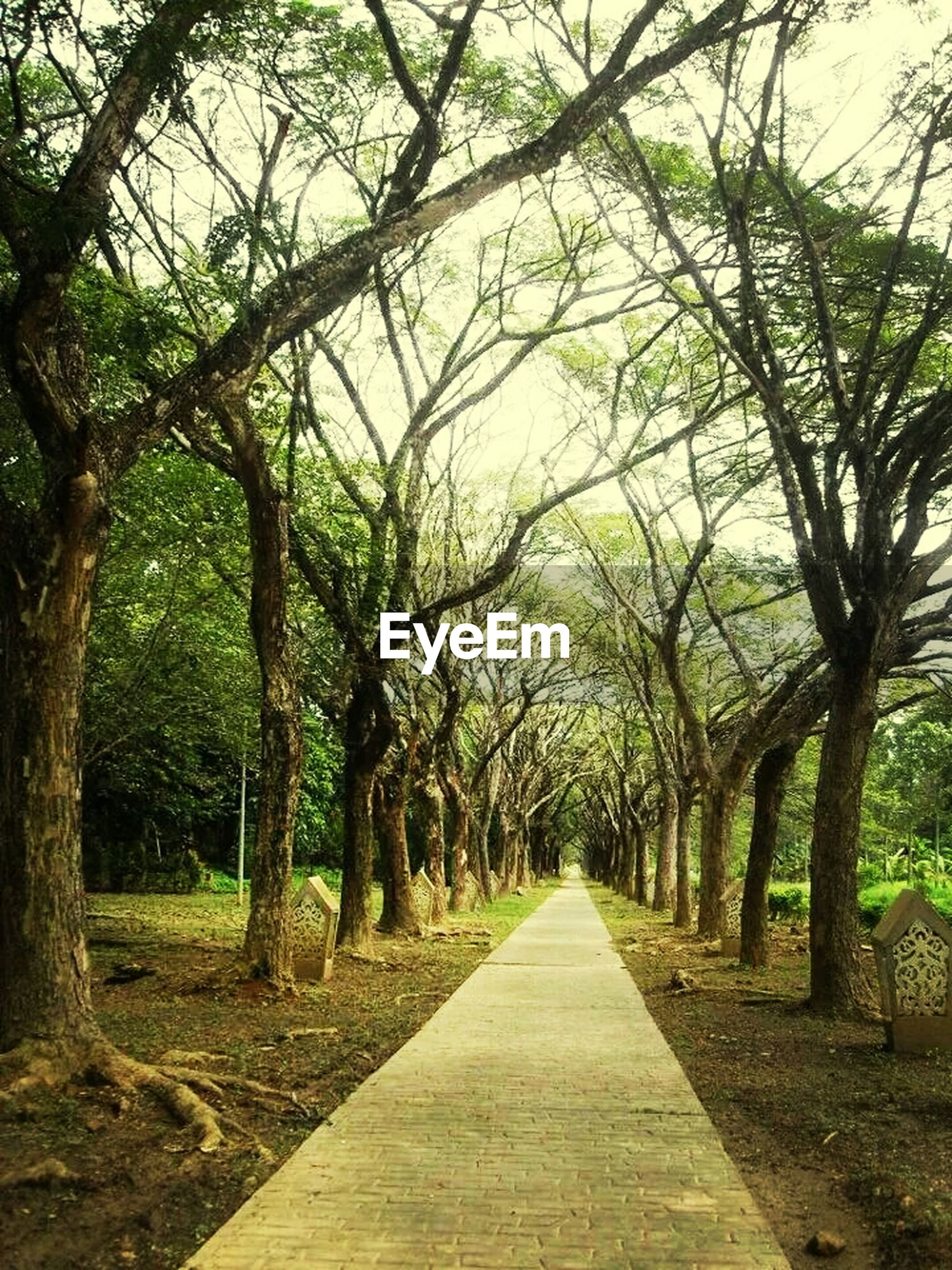 the way forward, tree, diminishing perspective, vanishing point, treelined, tranquility, growth, nature, road, tranquil scene, transportation, footpath, branch, tree trunk, long, beauty in nature, empty road, pathway, narrow, empty