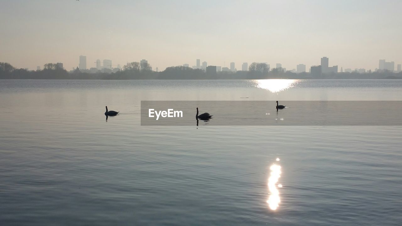Silhouette swans swimming in lake against clear sky