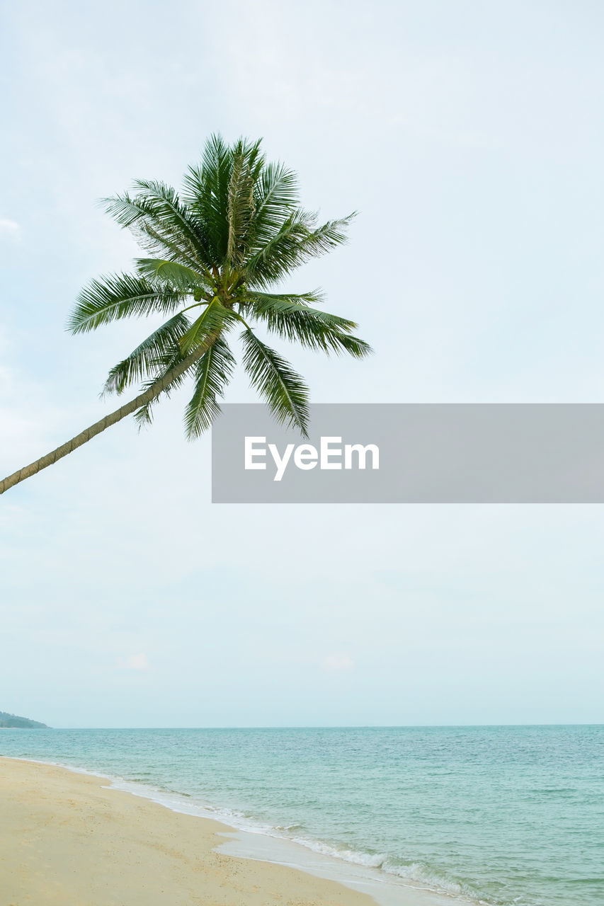 sea, water, sky, beach, horizon, horizon over water, beauty in nature, land, tropical climate, scenics - nature, palm tree, tranquility, nature, tranquil scene, tree, day, idyllic, remote, plant, no people, outdoors, coconut palm tree