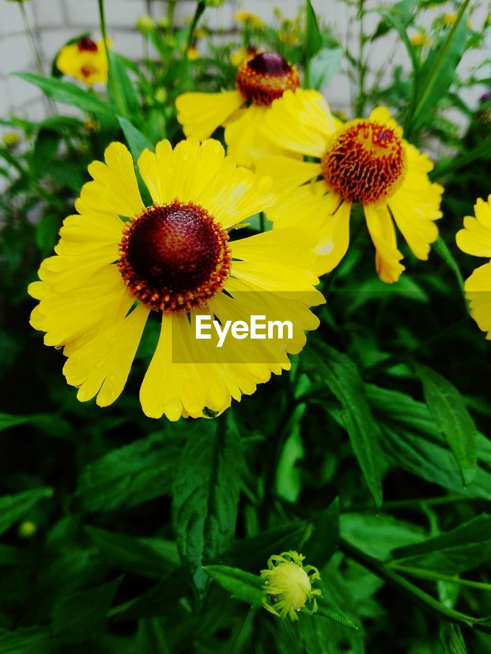 flower, yellow, petal, fragility, freshness, beauty in nature, nature, flower head, growth, plant, no people, outdoors, day, pollen, close-up, focus on foreground, green color, blooming, sunflower, leaf