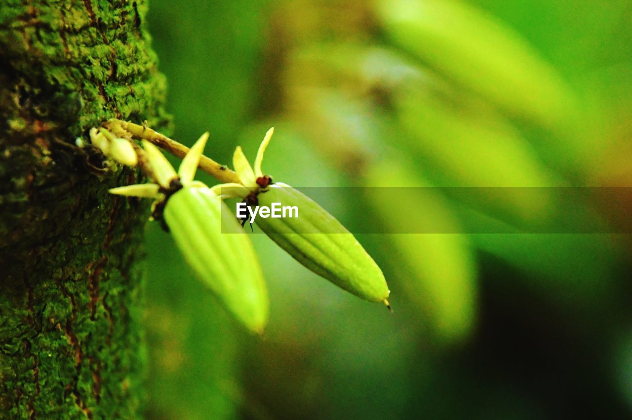 green color, plant, close-up, invertebrate, focus on foreground, growth, no people, insect, beauty in nature, animal themes, animal wildlife, nature, day, selective focus, one animal, animals in the wild, animal, plant part, freshness, outdoors