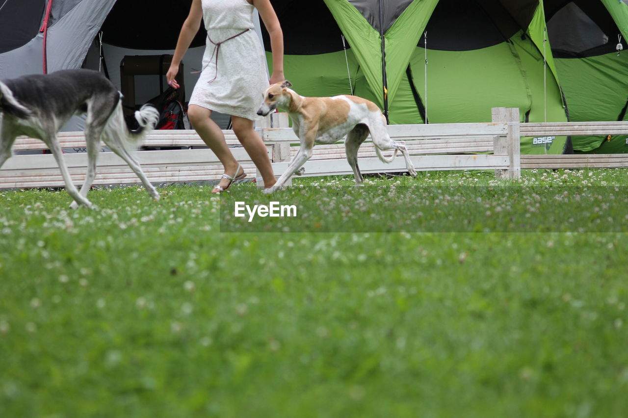 domestic animals, domestic, one animal, pets, grass, animal themes, mammal, canine, dog, animal, pet owner, real people, vertebrate, low section, plant, day, lifestyles, green color, leash, outdoors