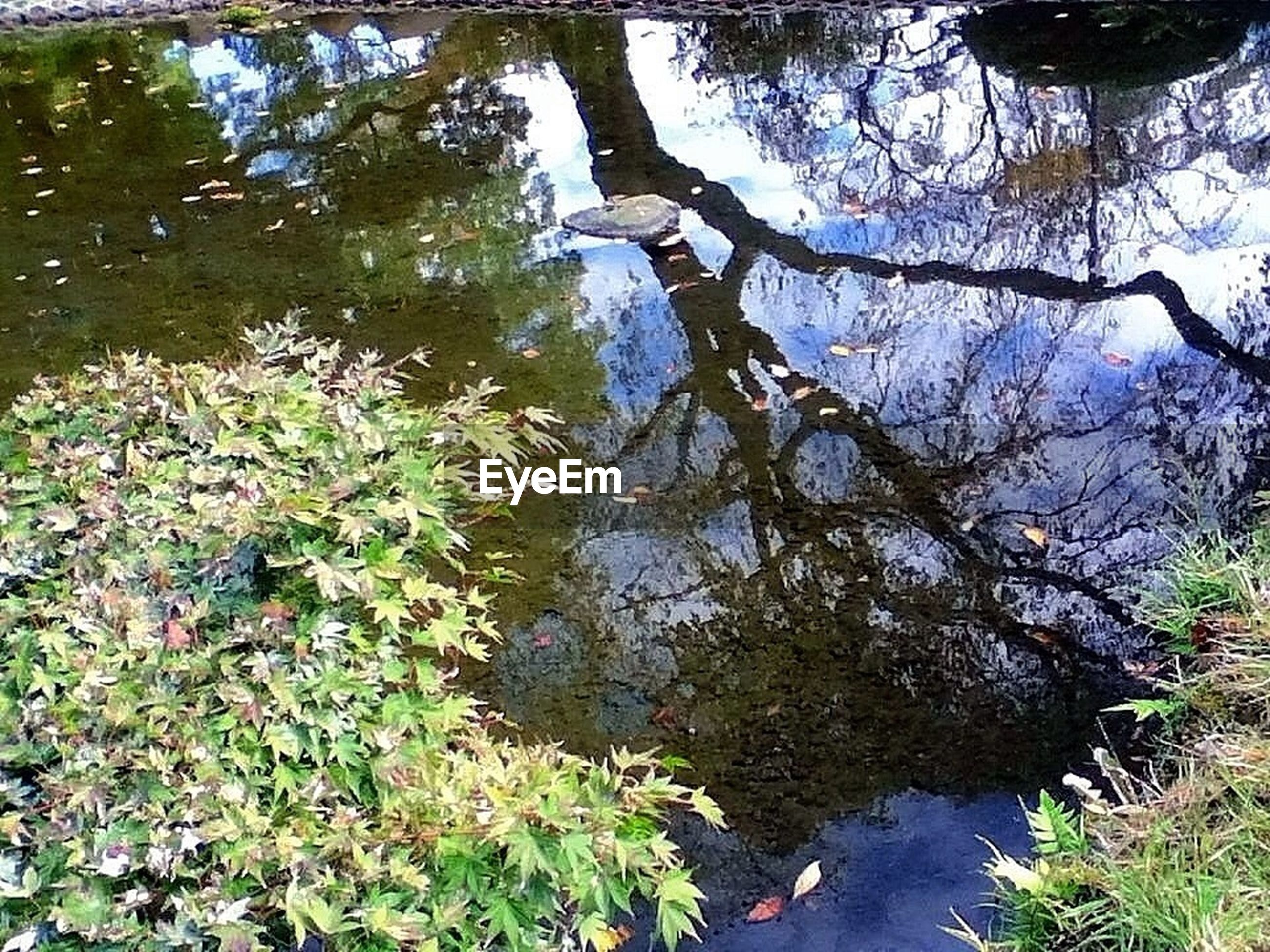 water, reflection, lake, tree, tranquility, nature, high angle view, tranquil scene, growth, branch, beauty in nature, pond, green color, plant, tree trunk, river, lakeshore, scenics, day, stream