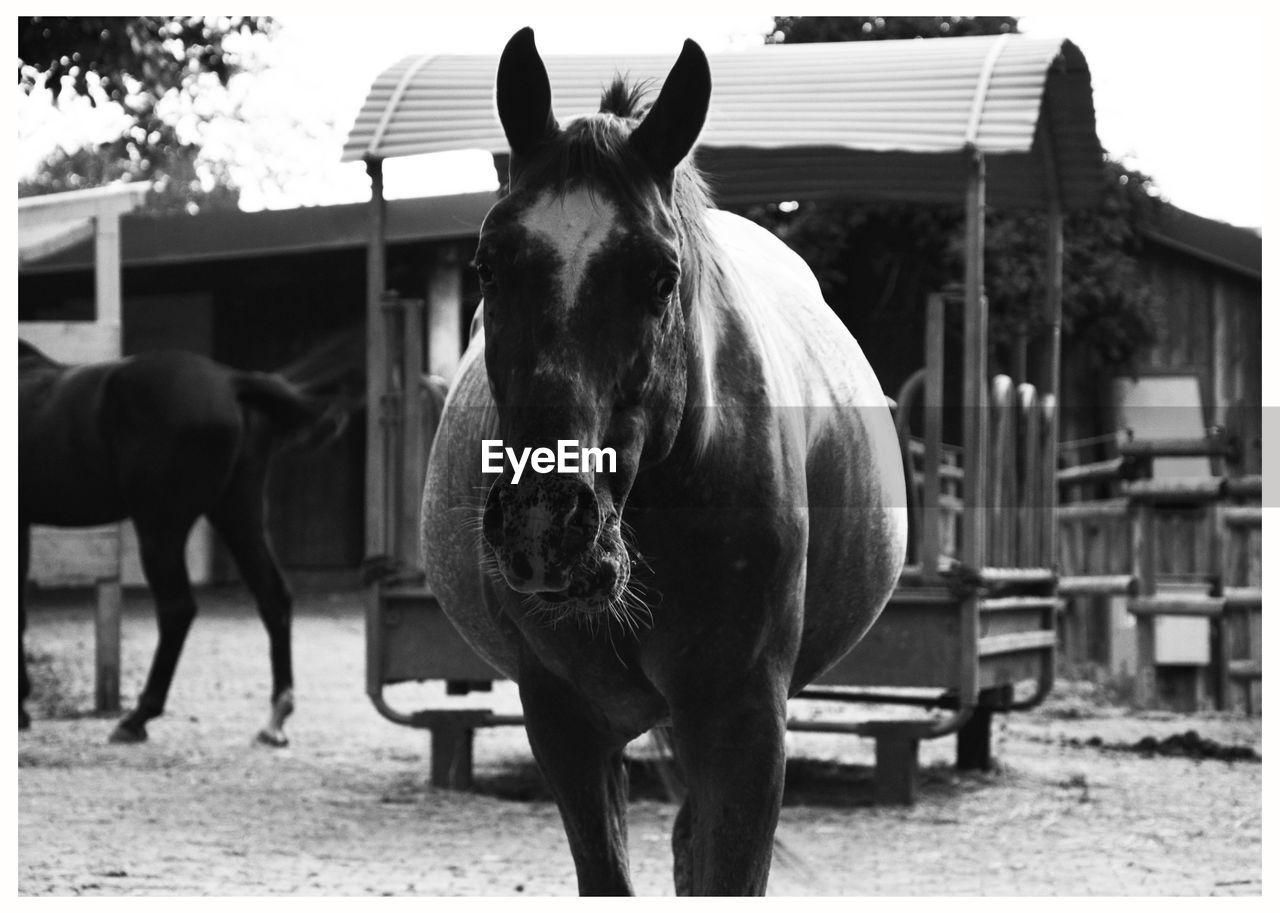 Portrait Of Horse On Ground