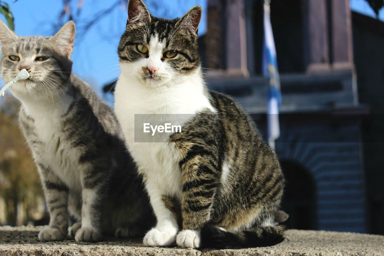 Portrait of cats sitting on footpath