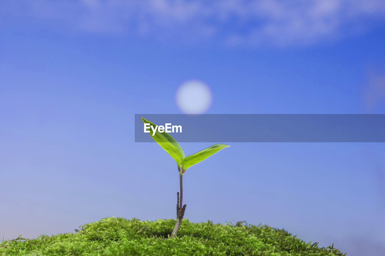 plant, growth, sky, beauty in nature, nature, green color, fragility, vulnerability, plant part, leaf, no people, tranquility, copy space, blue, day, outdoors, beginnings, close-up, freshness, clear sky
