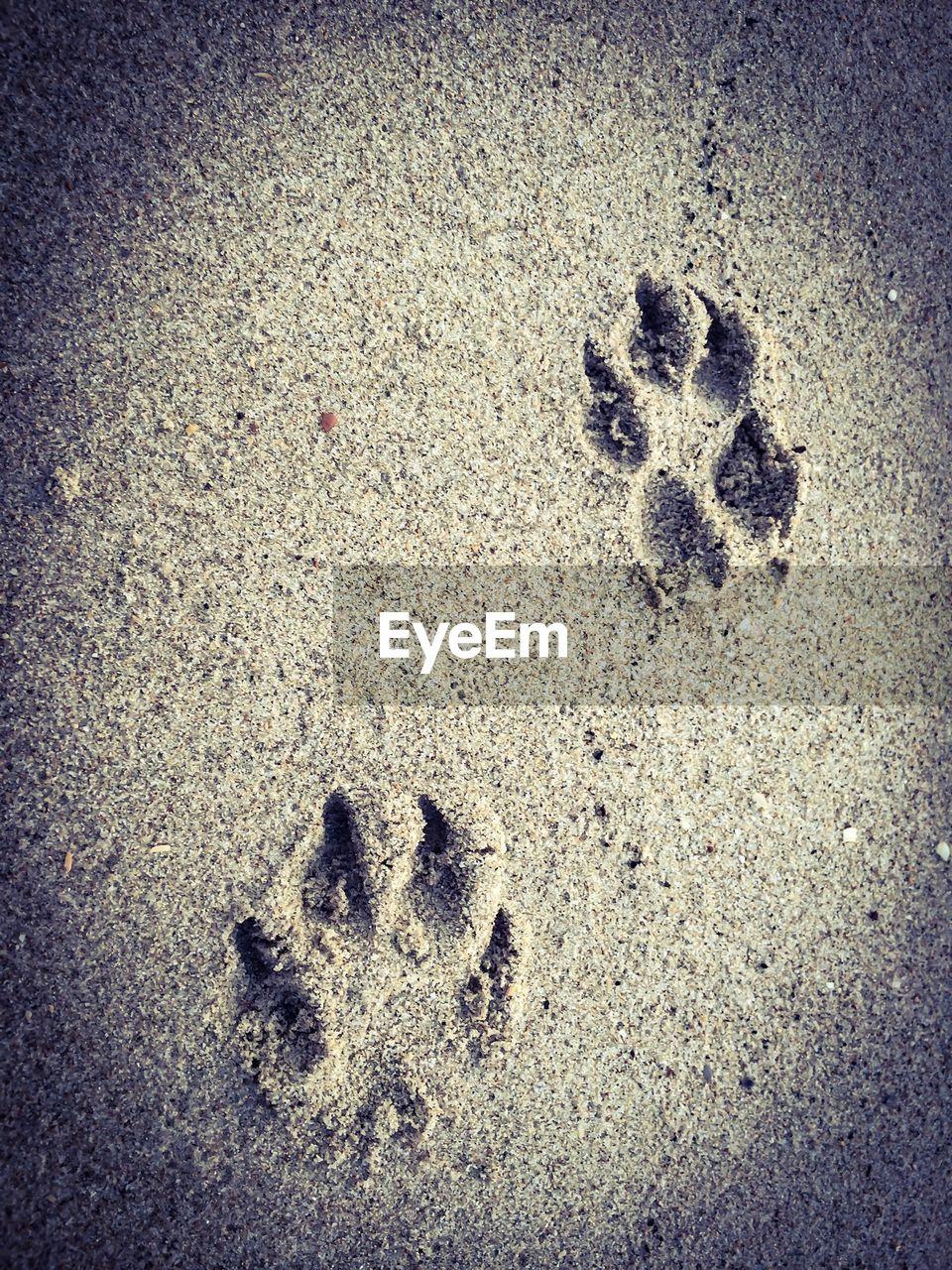 Dog footprints in sand
