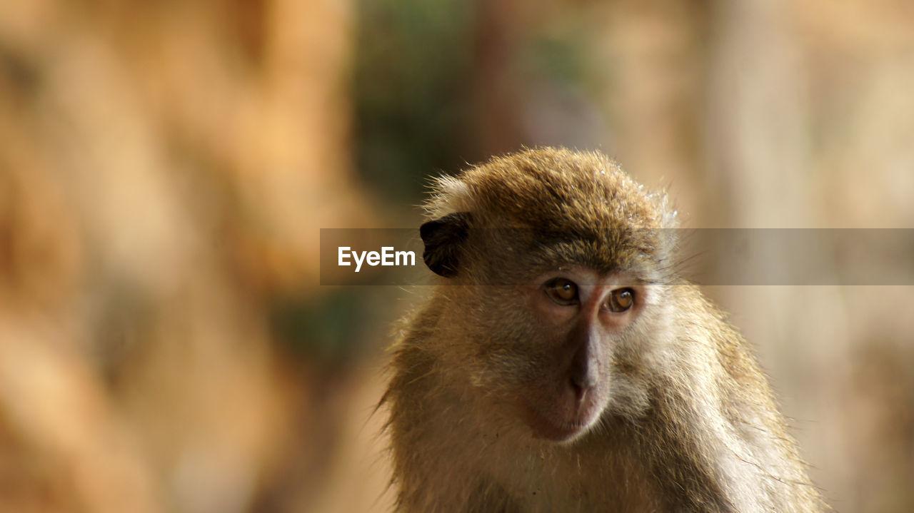 Monkeys of malaysia