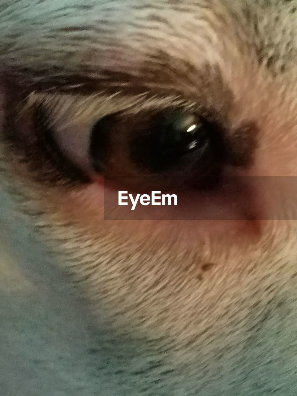 human eye, one person, close-up, real people, eyesight, human body part, sensory perception, eyeball, portrait, eyelash, indoors, looking at camera, men, iris - eye, pets, eyebrow, day, mammal, one man only, people