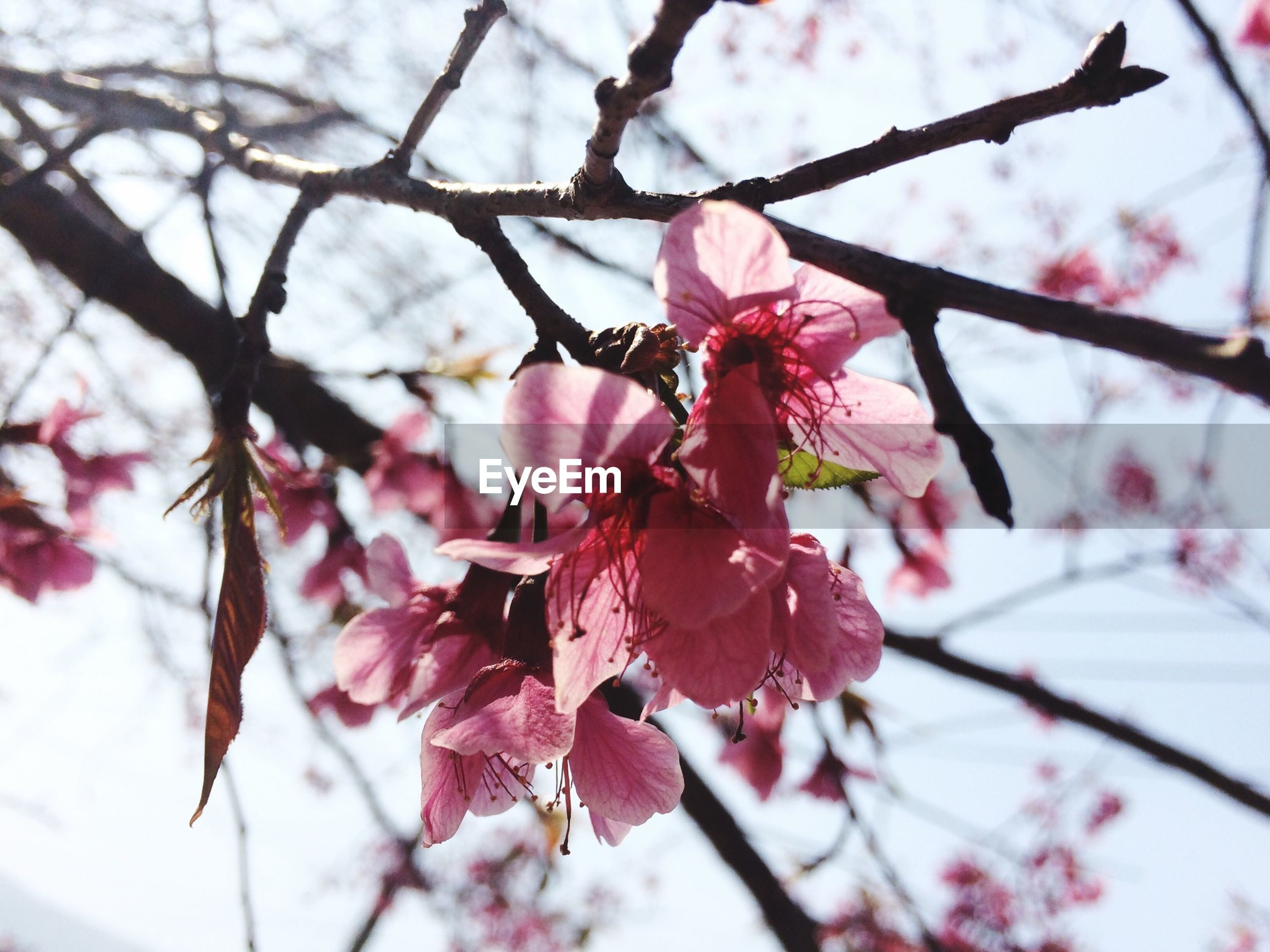 branch, flower, freshness, growth, focus on foreground, pink color, fragility, close-up, beauty in nature, tree, nature, twig, season, blossom, leaf, petal, springtime, low angle view, day, selective focus