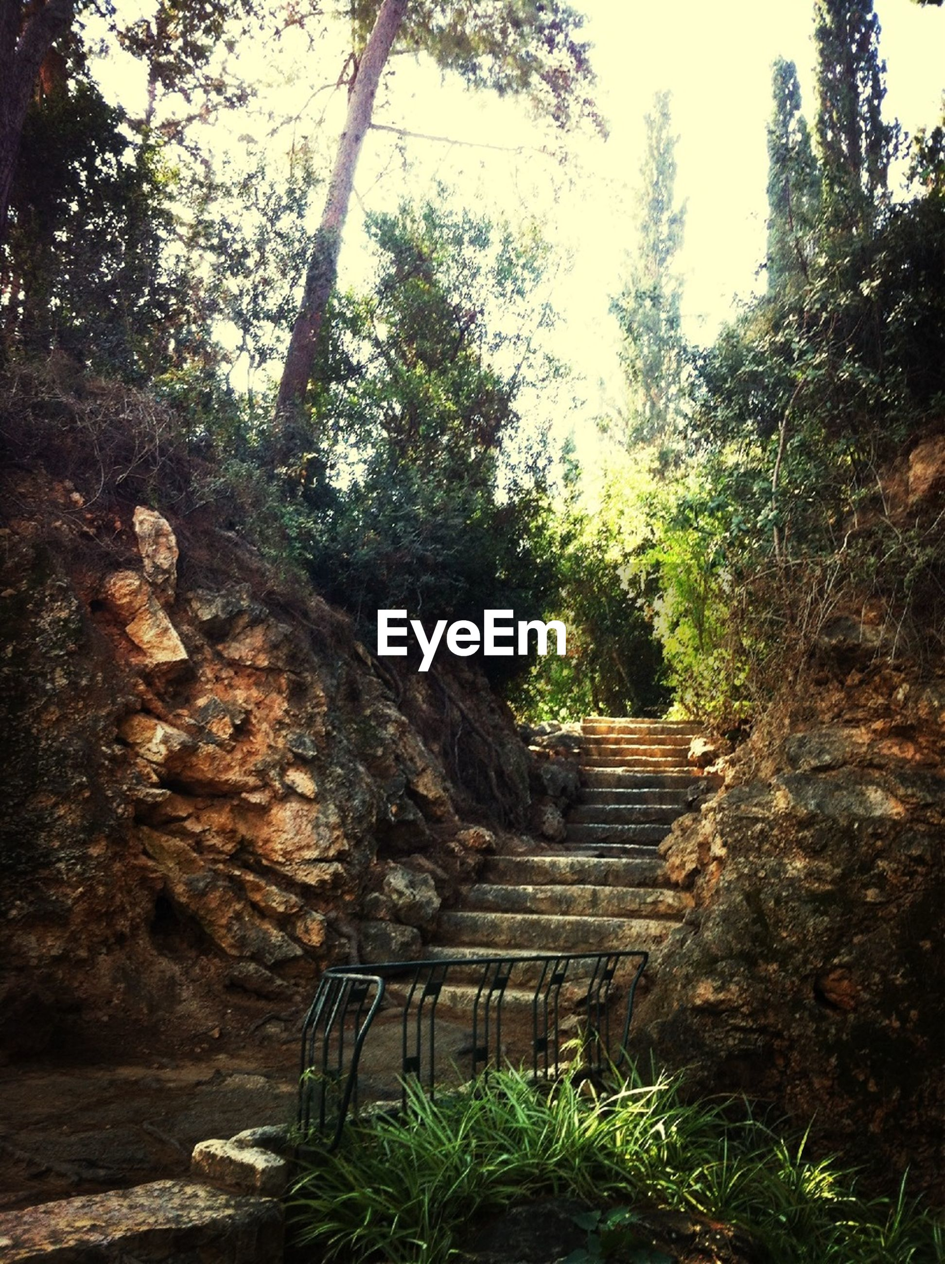 tree, steps, forest, tranquility, rock - object, nature, steps and staircases, tranquil scene, growth, staircase, plant, the way forward, non-urban scene, beauty in nature, day, wood - material, outdoors, scenics, tree trunk, non urban scene