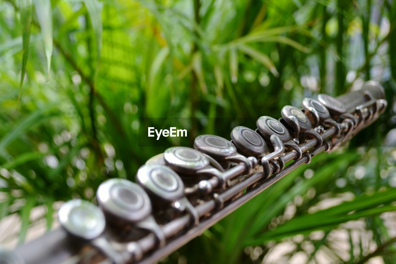 Cropped flute against plants