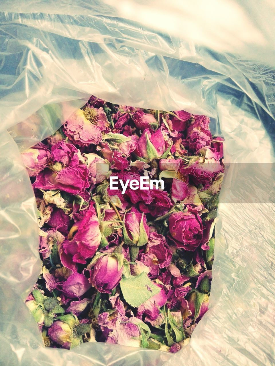 flower, flowering plant, plant, beauty in nature, freshness, close-up, nature, no people, bouquet, flower arrangement, vulnerability, fragility, petal, pink color, flower head, day, high angle view, indoors, inflorescence, bunch of flowers, purple, plastic bag