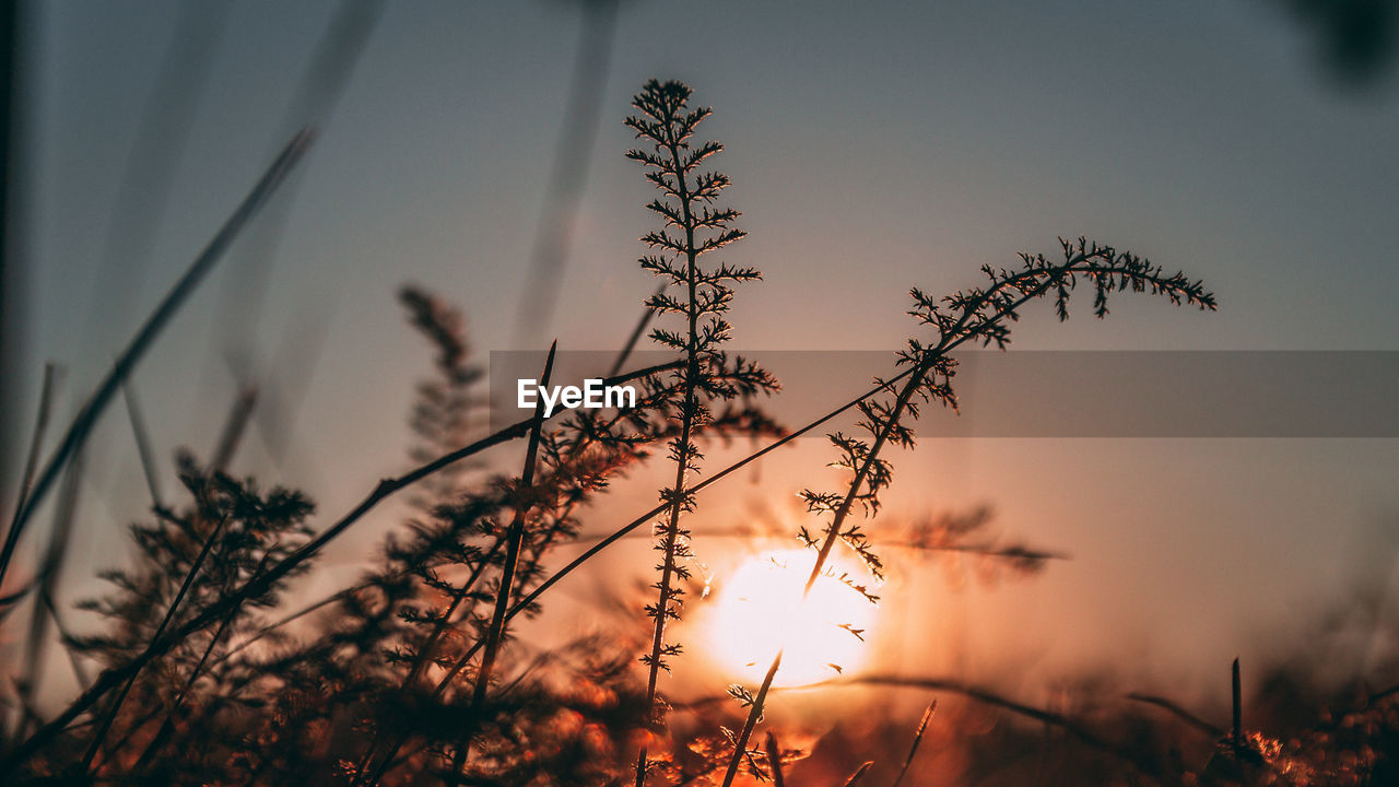 sky, plant, sunset, growth, beauty in nature, tranquility, nature, selective focus, no people, silhouette, focus on foreground, close-up, orange color, cloud - sky, outdoors, tranquil scene, field, scenics - nature, plant stem, non-urban scene, timothy grass, stalk