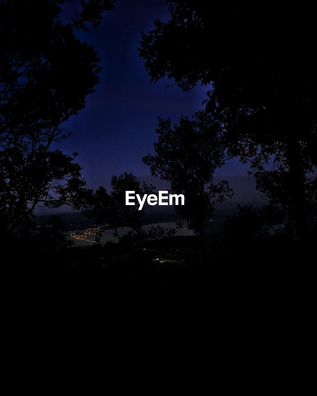 tree, plant, sky, silhouette, no people, nature, beauty in nature, night, tranquility, scenics - nature, growth, tranquil scene, dark, illuminated, outdoors, dusk, land, idyllic, environment, low angle view, moonlight