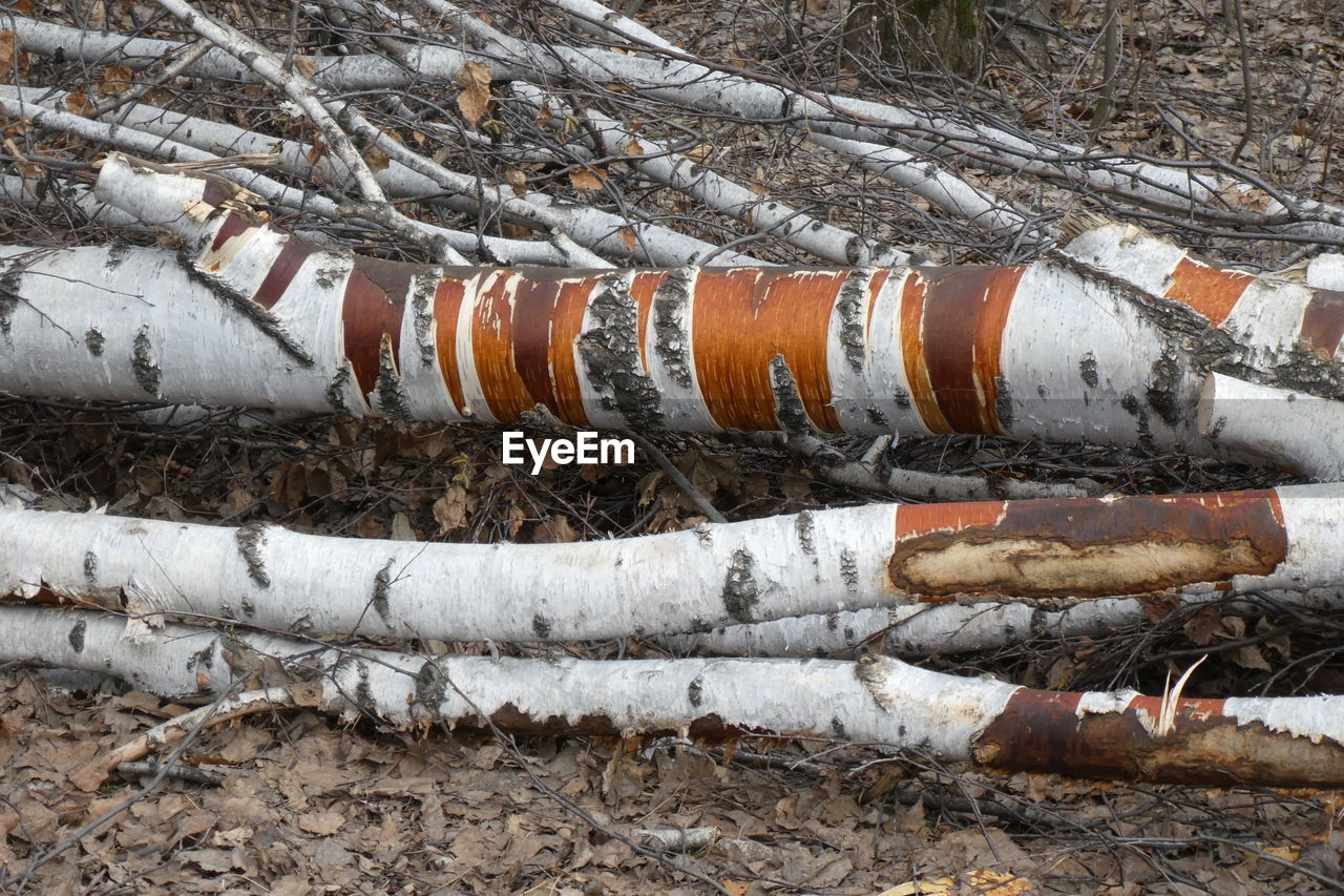 tree, pipe - tube, day, no people, log, nature, winter, cold temperature, snow, land, outdoors, timber, forest, industry, wood - material, environmental issues, fuel and power generation, deforestation, pipeline, pollution