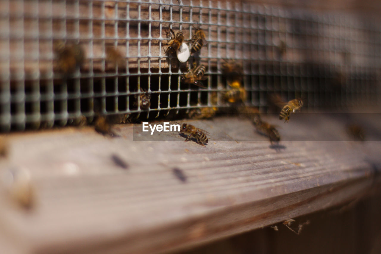 animal themes, insect, animals in the wild, beehive, bee, animal wildlife, apiculture, large group of animals, honey bee, selective focus, honeycomb, wildlife, domestic animals, close-up, no people, colony, outdoors, day, mammal