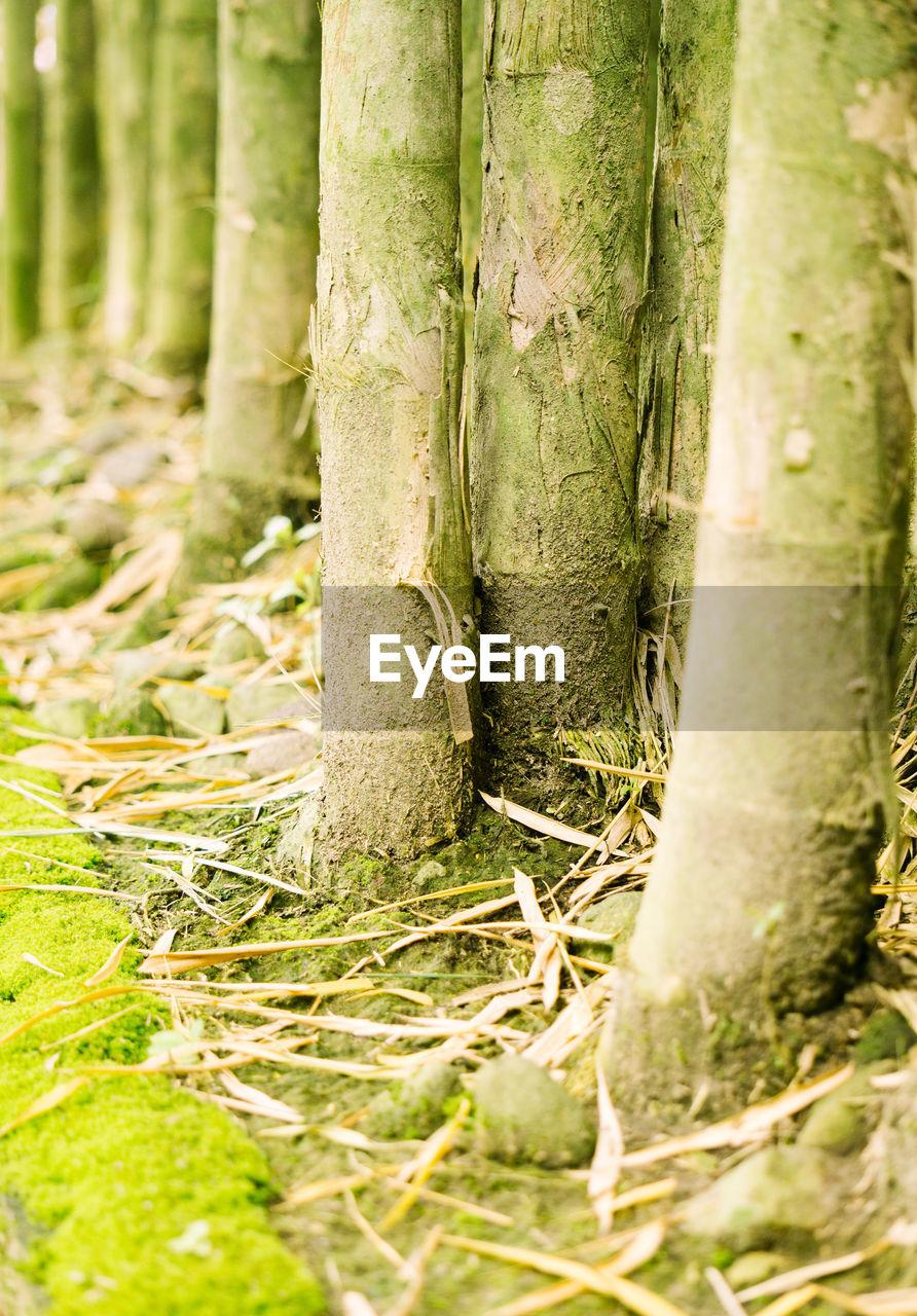 High angle view of bamboo plants