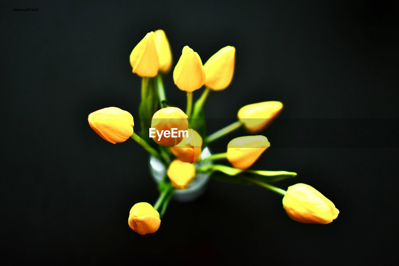 flower, vulnerability, flowering plant, fragility, plant, close-up, freshness, growth, beauty in nature, studio shot, no people, flower head, petal, black background, inflorescence, nature, plant stem, indoors, yellow, copy space