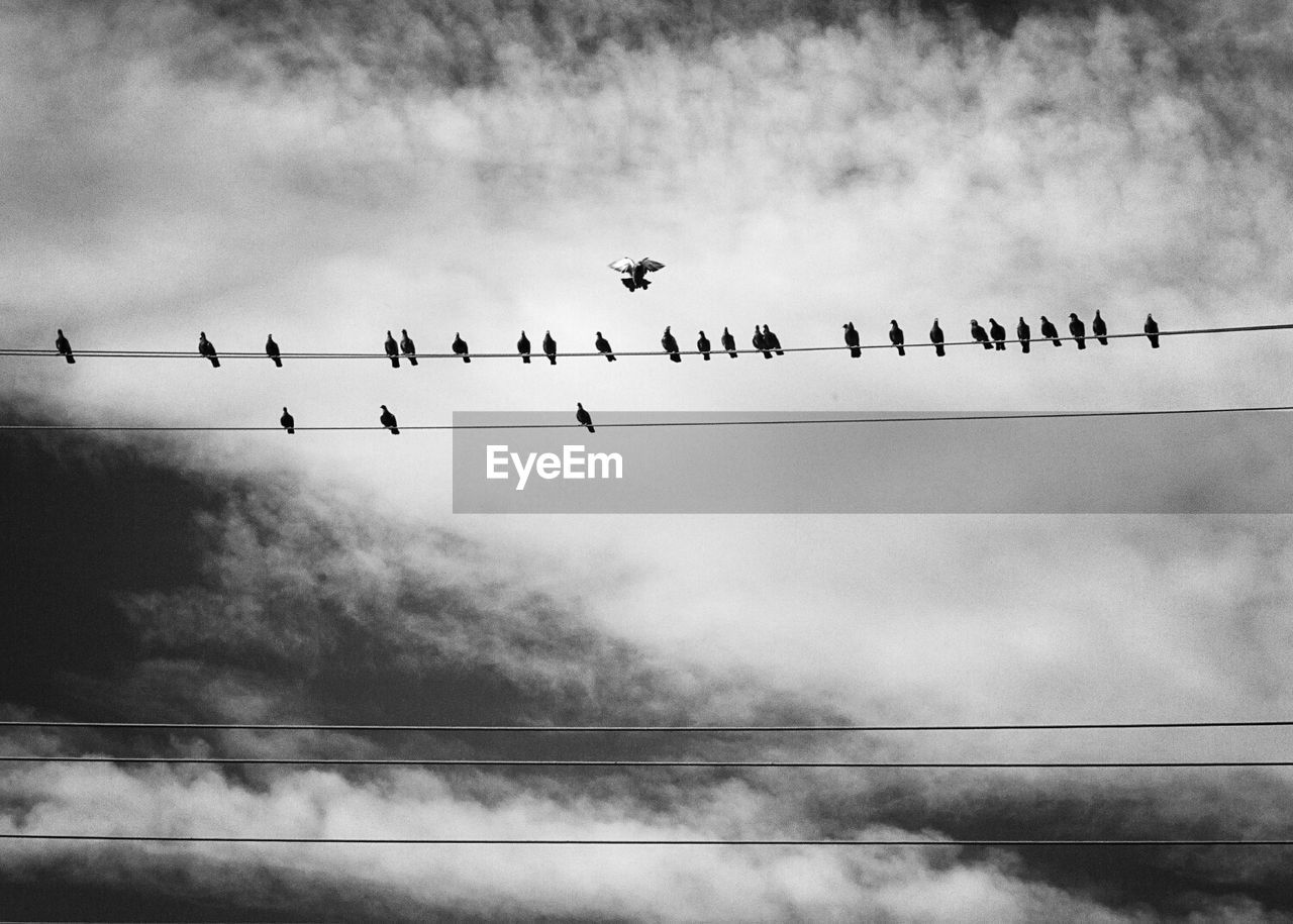 Low Angle View Of Pigeons Perching On Power Cables Against Cloudy Sky